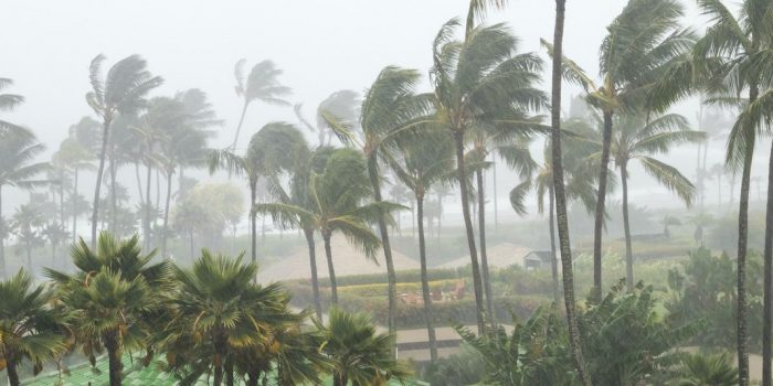 Palm trees blowing in the wind and rain as a hurricane approaches a tropical island coastline